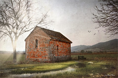 The brick (Jean-Michel Priaux) Tags: paysage nature landscape scherwiller alsace france brick wall house littlehouse paint painting sun sunset sunlight shadow priaux tree sky light lonesome lonely alone home