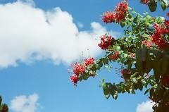 Sunny day. (蒼白的路易斯) Tags: yashicaelectro35gsn 底片 底片攝影 flower nature taiwan taipei 台北植物園 kodakvision350d