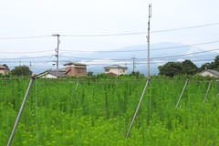 oi#23 (tetsuo5) Tags: 足柄上郡 大井町 ashigarakamigun oimachi pentax pentaxqs1 smcp515mmf2845