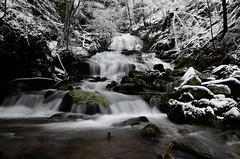 DSC_0302_M (Giacomo Maria) Tags: vallombrosa acqua neve inverno winter