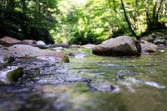 stream (8-ballmabelleamie) Tags: greatsmokymountainsnationalpark river creek water clear lowangle summer