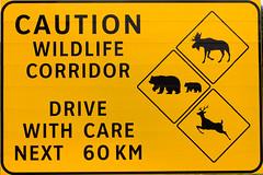 Señal de precaución en Jasper (Alberta - Canadá)