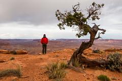 cedar point overlook (Sam Scholes) Tags: neverstopexploring adventure utah southernutah landscape beautiful slotcanyon canyon redrock cedarpointoverlook dirtydevil canyoneering canyoncountry robbersroost wilderness nature