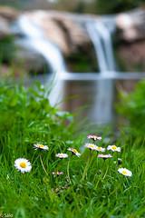 moli de Brotons (salo75) Tags: agua bokeh paisaje landscape d700 moià water molidebrotons flores flor catalunya flowers nikon castellcir provinciadebarcelona españa
