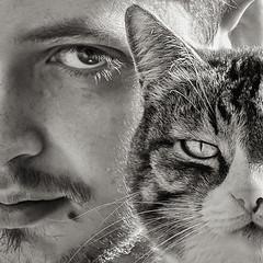 Regard (Claudie CF) Tags: regard chat bw pets closeup domestic cat animal portrait