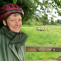 226 2019 returning a lost sheep to the field (Margaret Stranks) Tags: 226365 365days 2019 sheep field gate helmet gloucestershire colnstaldwyns