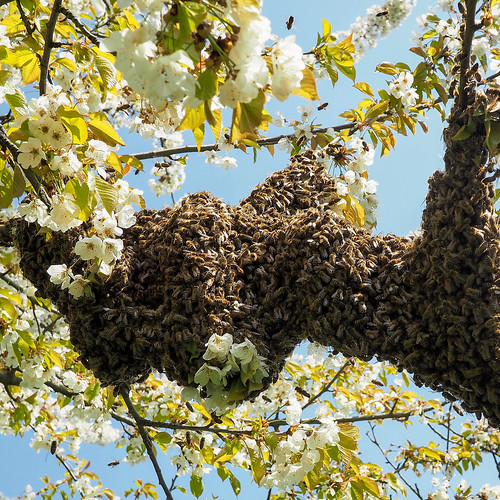 How Start Out Beekeeping Naturally