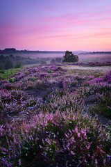 Rockford Common 2019 (Stu Meech) Tags: heather sunrise the new forest rockford common nikon z6 20mm f18 leefilters