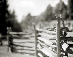 Rail fence (efo) Tags: bw film largeformat 4x5 virginia fence splitrail railfence mountains blueridge