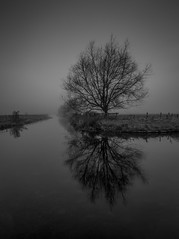 Black and white tree (paullangton) Tags: mono tree hertford hertfordshire river winter reflection bw blackandwhite canon misty cold monochrome lee filters landscape field fence moody longexposure