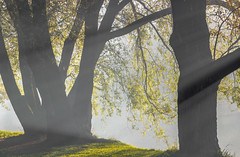 Morning in the Park (Viktorovich i am) Tags: morning fog light trees park beauty утро туман свет деревья парк красота