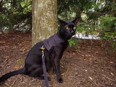 Part Demon (annette.allor) Tags: cat adventure eyes glow kakashi