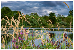 Au bord de l'eau (Pascale_seg) Tags: landscape paysage rivière river riverscape moselle lorraine grandest france nikon berges eau aqua water reflets riflessi reflections été summer estate fleurs flowers fiori
