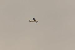 Pilotų mokykla Cessna 172H (Jonas Juodišius) Tags: lietuva lithuania vilnius verkiai verkiuparkas neris theneris