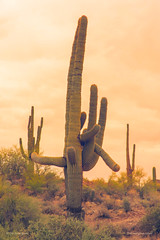 Classic Arizona Giant Saguaro (Striking Photography by Bo Insogna) Tags: scottsdale sonorandesert saguaros desertvegetation natural prickly scenery western outdoor ocotillo canyon azcacti southwestern cacti arms scenic sunset mountain dusk silhouette dry