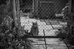 L1001154 (whitedeadly) Tags: m leica leicam10 m10 bokeh 35mm bubble street shot bnw blackandwhite blackwhite captureone test cat life noctilux 095 f095 asph 50