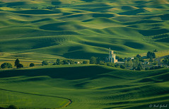 Palouse Greenery (robert_golub) Tags: washingtonstate steptoebutte farms fields green palouse