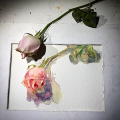 Day 1467. The #rose #painting for today. #watercolour #watercolourakolamble #sketching #stilllife #flower #art #fabrianoartistico #hotpress #paper #dailyproject (akolamble) Tags: rose painting watercolour watercolourakolamble sketching stilllife flower art fabrianoartistico hotpress paper dailyproject