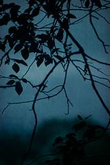 226/365 - Nightcrawler