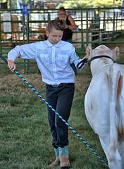 County Fair (Scott 97006) Tags: girl female cow animal fair show judged