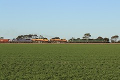 5504S Mallala - Korunye 14/08/2019 (Dom Quartuccio) Tags: 5504s c510 c509 brm001 brm002 c507 ssr southern shorthaul railroad train trains rail railway transport transportation graintrain grain drought relief sa south australia adelaide mallala korunye cs brms field paddock farmland green crop crl