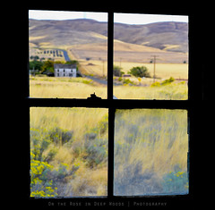 The grass is greener on the other side... (goat_legs) Tags: window abandoned washington ghosttown