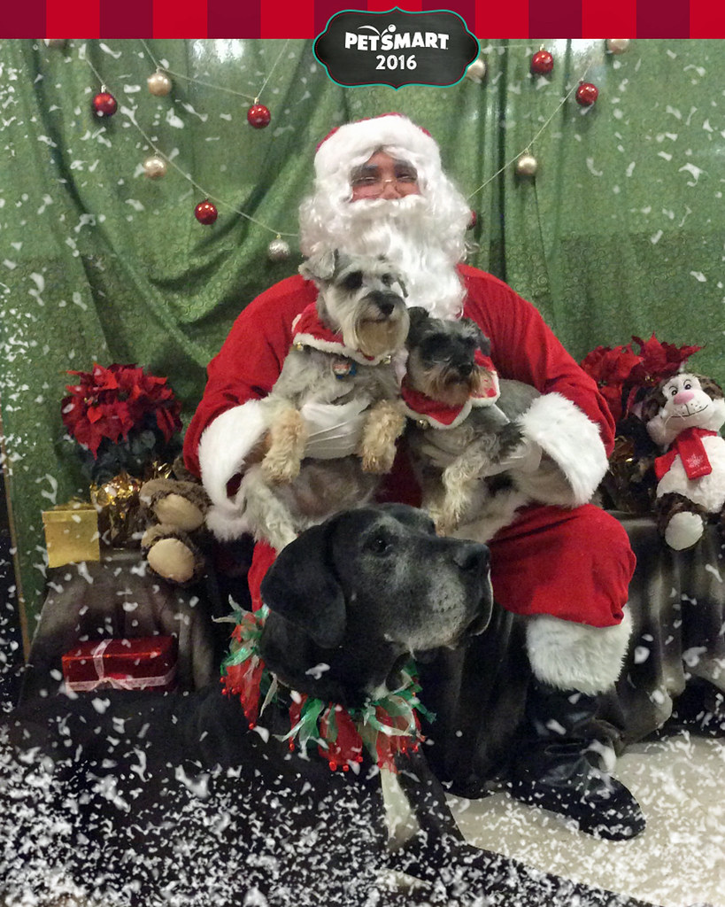 Petsmart Christmas Hours.The World S Most Recently Posted Photos Of Petsmart Flickr