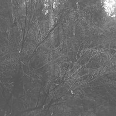 Dead tree (Matthew Paul Argall) Tags: 120film 120 mediumformat squareformat squarephoto blackandwhitefilm blackandwhite ilforddelta100 100isofilm