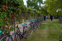 IMG_6505 (Omega Man) Tags: winnipeg manitoba canada plainbicycle dutch bike 2019 rollout distribution party random surprise august 14