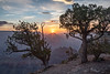 The Sun Rises (Kirk Lougheed) Tags: arizona coloradoplateau grandcanyon grandcanyonnationalpark juniperusosteosperma southrim usa unitedstates utahjuniper yakipoint canyon juniper landscape nationalpark outdoor park pine pinyon piñon rim summer sunrise tree