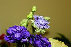 Lisianthus (abrideu) Tags: abrideu canoneos100d lisianthus macro flowers depthoffield bright bokeh bouquet ngc npc