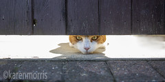 #77 A Narrow Gap (119 Pictures In 2019) (kazmorris) Tags: 119picturesin2019 narrow gap cat