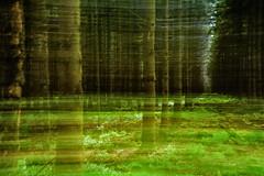 Effet boisée (musette thierry) Tags: realisation éffet musette thierry d800 amusement bois vert ete belgique hautesfagnes