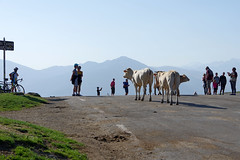 09h42, col d'Aspin (Hautes-Pyrénées) : manifestation bovine (bernarddelefosse) Tags: coldaspin hautespyrénées occitanie france vache paysage