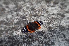 Red Admiral (nick.easom) Tags: pentax lensbaby eastlondon stratford redadmiral butterfly