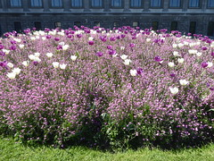 Gorgeous purple and white (seikinsou) Tags: brussels belgium bruxelles belgique spring cinquantenaire park flower blossom purple white tulip pink forgetmenot