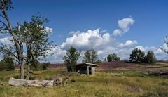 Lüneburger Heide (Fritz Zachow) Tags: landschaft pflanzen bäume bienenstock himmel wolken heide