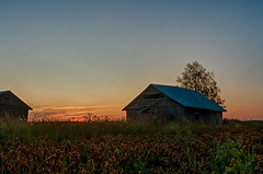 Barns And A Dramatic Sunset (k009034) Tags: copyspace europe finland outdoors ruralscene tranquilscene agriculture barn barnhouse beautiful birch country countryside farm farming field idyllic landscape leaf nature nopeople plant potato rural sky summer sunset tree