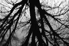 DARK WATER (Elisa Medeot) Tags: albero tree riflesso reflexion river water acqua fiume