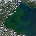 Blue-Green Algae in Lake Erie