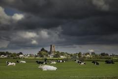 "The threatening sky (Marijke M2011) Tags: landscape dutchlandscape cows meadow ""threateningskies"" threatening thenetherlands peaceful amsterdamarea marijkemooyphotography canoneos5dmarkii ransdorp noordholland"