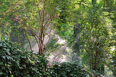 Lluvia (Micheo) Tags: spain bosquedelaalhambra magia granada alhambra riego magic paseo walk wood forest verde green arboles hojas agua water