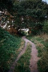 zwei Wege werden eins (Fichtenelch69) Tags: weg way schleswigholstein holnis natur nature gras grass baum tree sunlight sunset germany fujifilm retro vintage kodake200