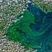 Blue-Green Algae in Lake Erie, variant