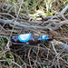 And nearby .... the discarded beer bottle