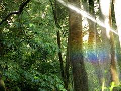 Arco iris (Micheo) Tags: spain bosquedelaalhambra magia granada alhambra riego magic paseo walk wood forest verde green arboles hojas agua water