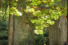 Pose en el Arco de las Orejas (Micheo) Tags: spain bosquedelaalhambra magia granada alhambra riego magic paseo walk wood forest verde green arboles hojas agua water