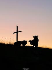Die Kühe des Teufels.... (F!o) Tags: lenggries bayern deutschland cow kühe gipfel summit mate20pro huawei alpen alps hochalm badtölz tölz bavaria