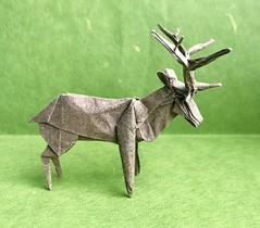 Roosevelt Elk (日輪富 Philogami) Tags: origami philogami robert j lang roosevelt elk gerard paper folding wildlife animal art