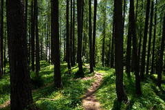 Triglav National Park (mireiatarres) Tags: nature trees light green forest path paisaje outside